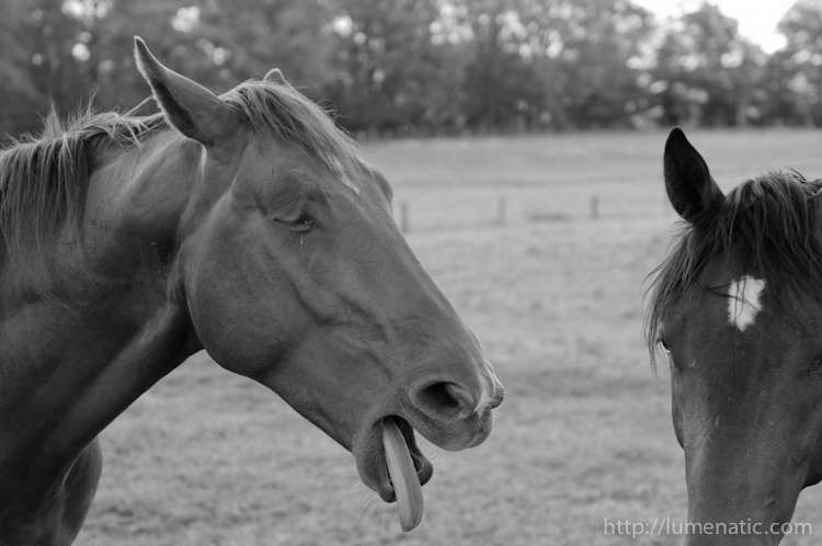 When horses are about to throw up…