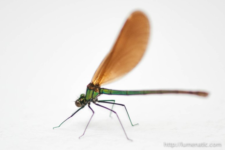 Dragonfly evolution – Don't give up on images too quickly
