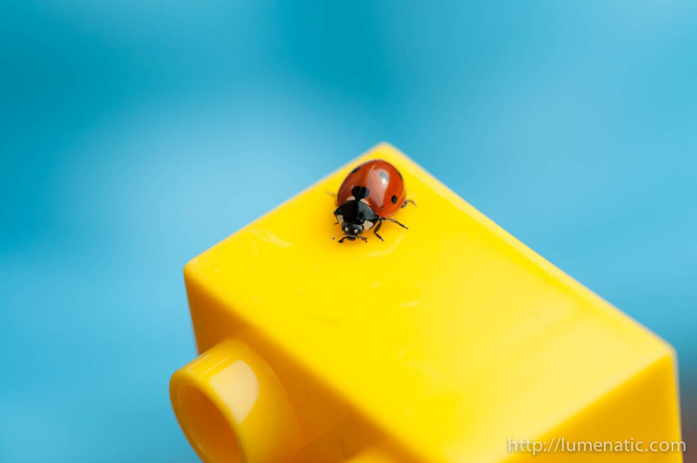 Ladybug and Duplos