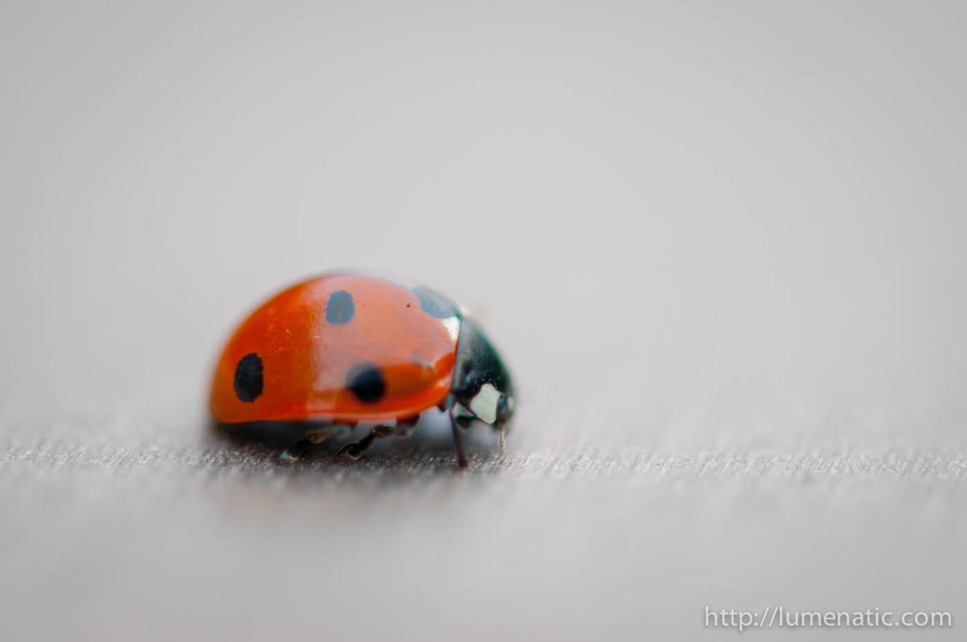 Another ladybug post