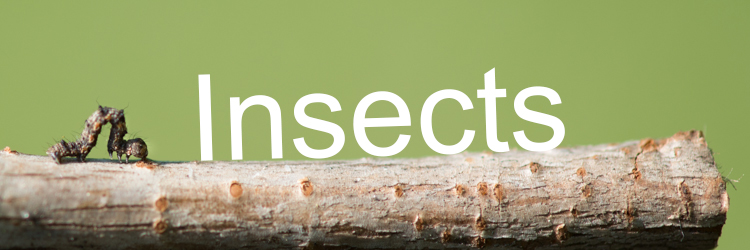 Announcing insect week