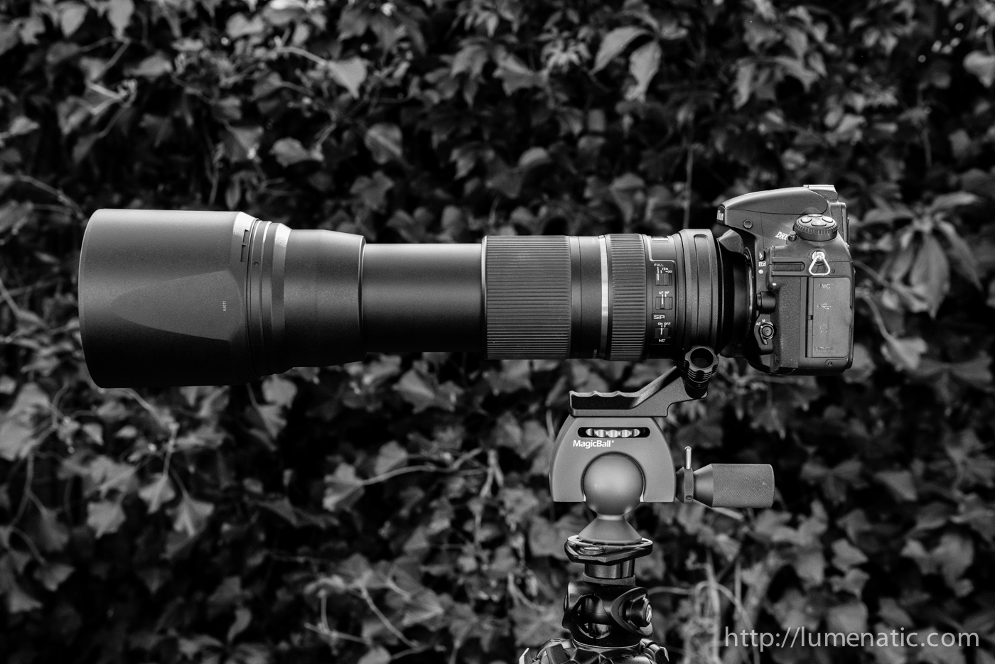 The Tamron 150-600 mm telezoom lens