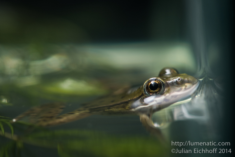 Shooting a frog close-up