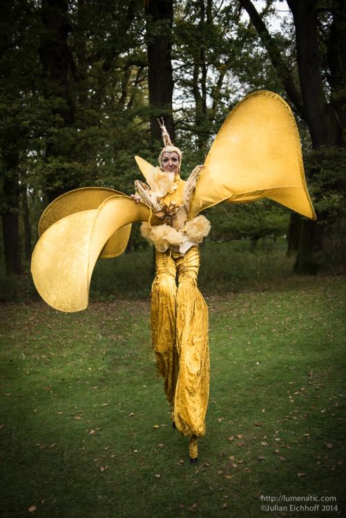 Golden Fairy Evolution